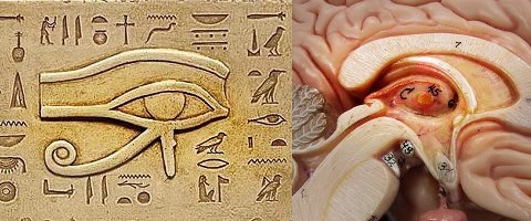 pineal gland and eye of horus